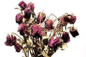 dead-roses-300x200